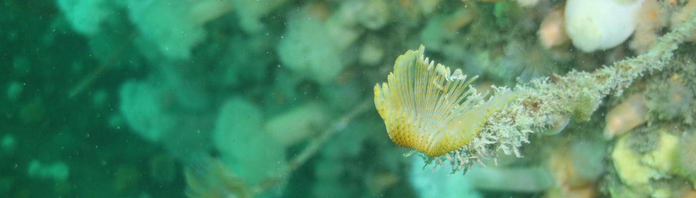 Scuba Diving UK